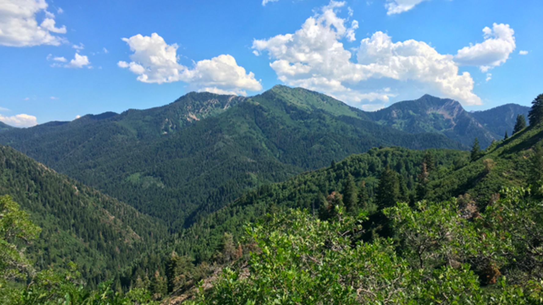 Trails-in-Milkreek-Canyon